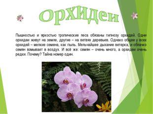 Пышностью и яркостью тропические леса обязаны гипнозу орхидей. Одни орхидеи ж