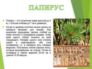 Папирус – это гигантская трава высотой до 5 м, с толстым стеблем до 7 см в ди