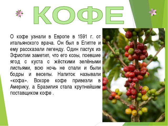 О кофе узнали в Европе в 1591 г. от итальянского врача. Он был в Египте и ему...