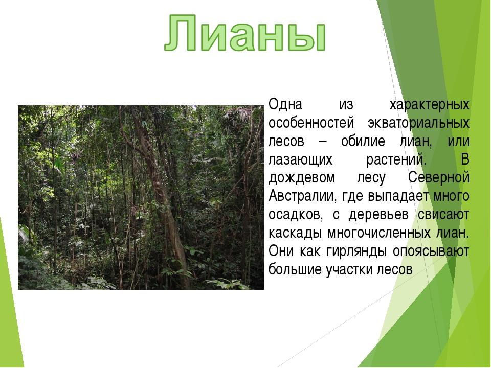 Одна из характерных особенностей экваториальных лесов – обилие лиан, или лаза...
