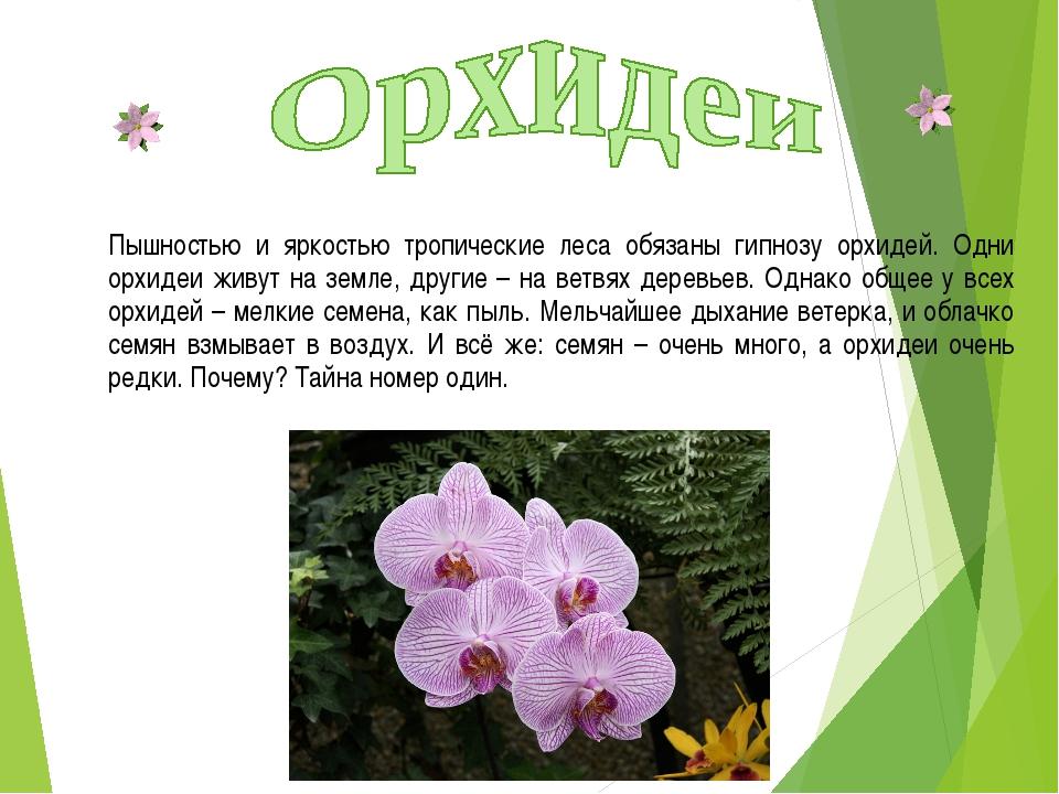 Пышностью и яркостью тропические леса обязаны гипнозу орхидей. Одни орхидеи ж...