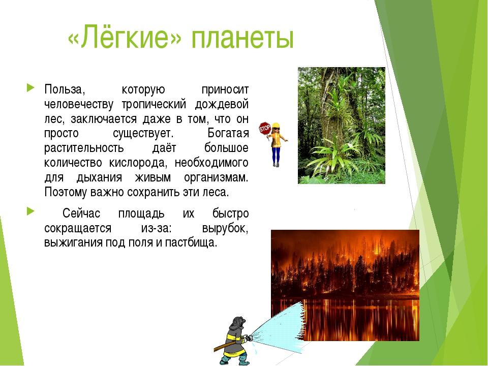 «Лёгкие» планеты Польза, которую приносит человечеству тропический дождевой...