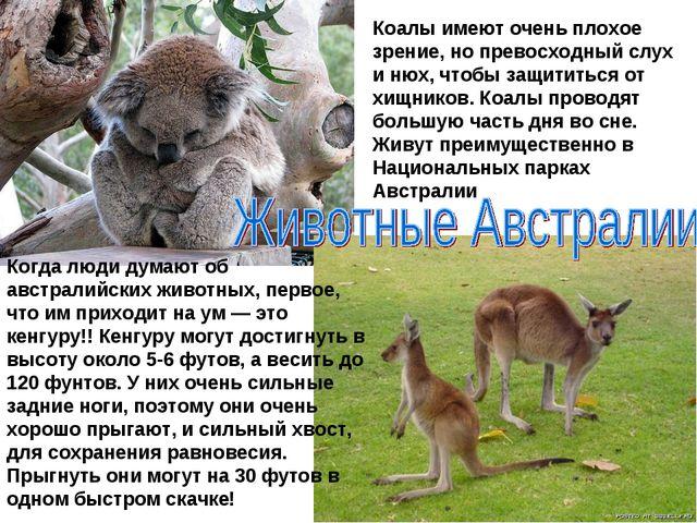 Когда люди думают об австралийских животных, первое, что им приходит на ум —...