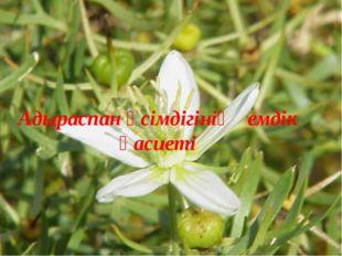 Адыраспан өсімдігінің емдік қасиеті