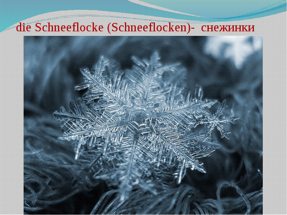 die Schneeflocke (Schneeflocken)- снежинки