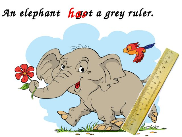 An elephant got a grey ruler. has