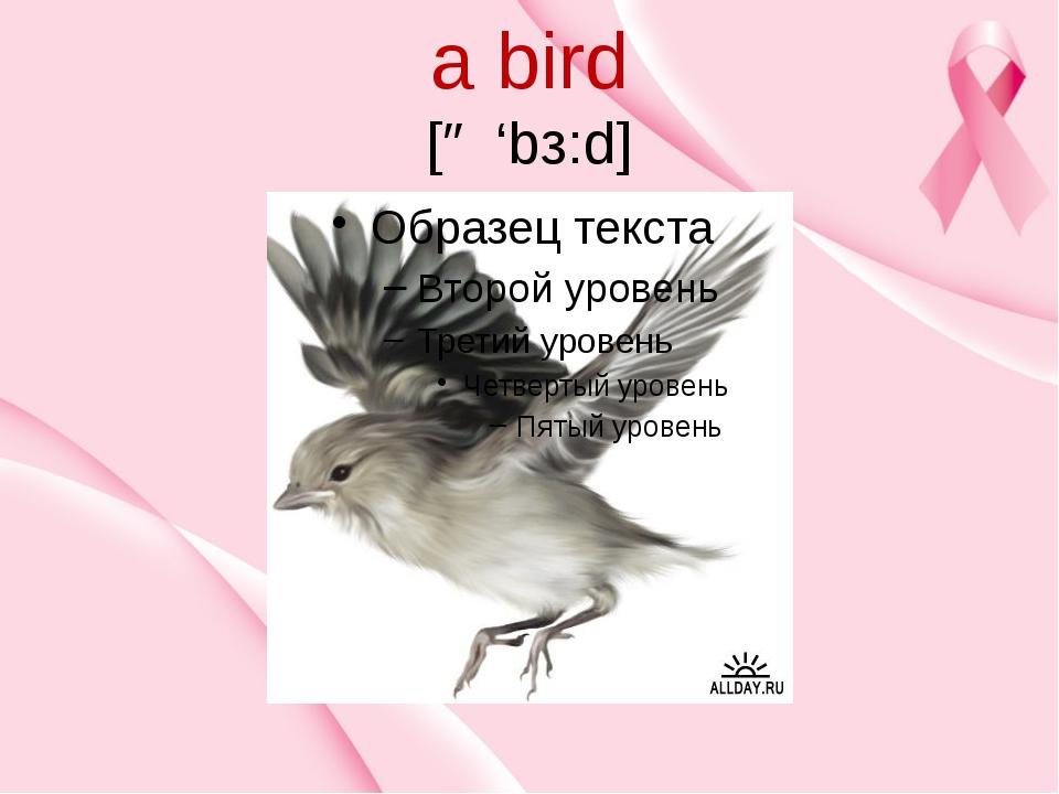 a bird [ə 'bз:d]