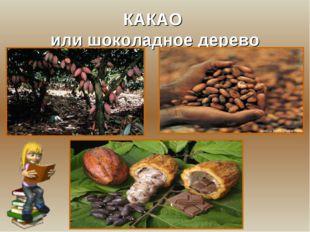 КАКАО или шоколадное дерево