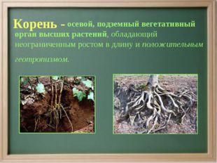 Корень - осевой, подземный вегетативный орган высших растений, обладающий нео