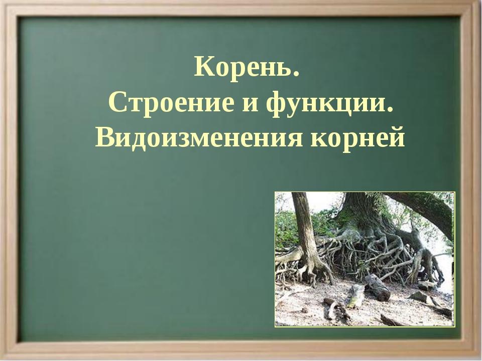 Корень. Строение и функции. Видоизменения корней