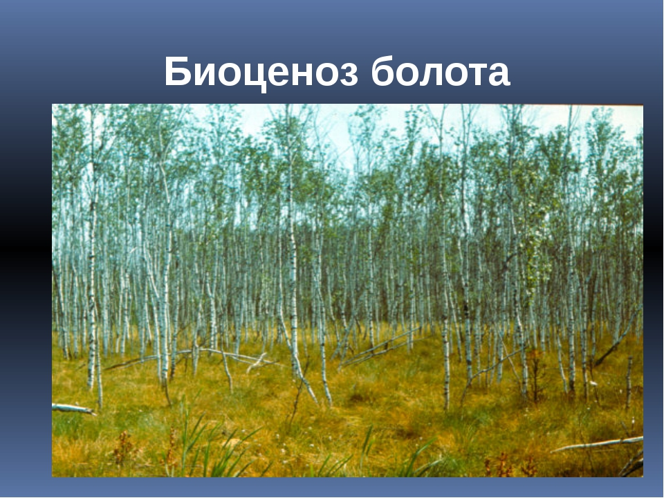 Биоценоз болота