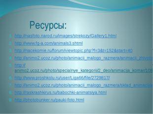 Ресурсы: http://nasfoto.narod.ru/images/strekozy/Gallery1.html http://www.fg
