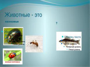 Животные - это насекомые ?
