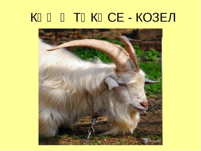 КӘҖӘ ТӘКӘСЕ - КОЗЕЛ