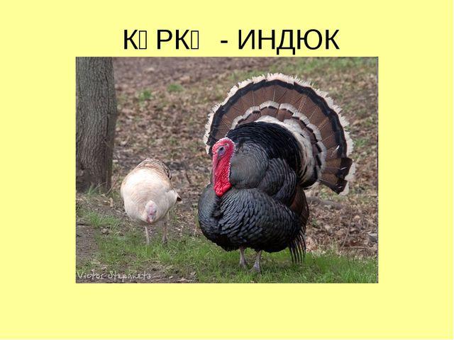 КҮРКӘ - ИНДЮК