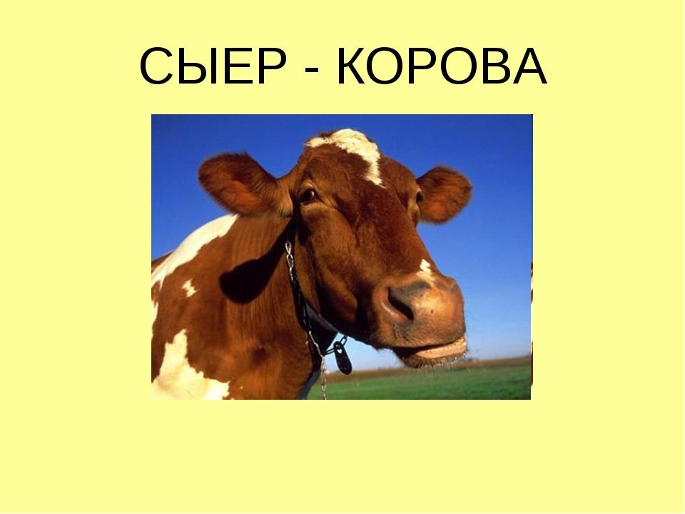 СЫЕР - КОРОВА