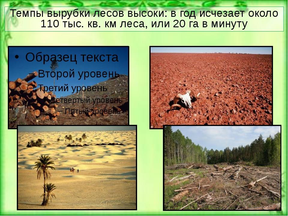Темпы вырубки лесов высоки: в год исчезает около 110 тыс. кв. км леса, или 20...