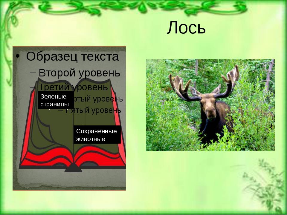 Лось Зеленые страницы Сохраненные животные