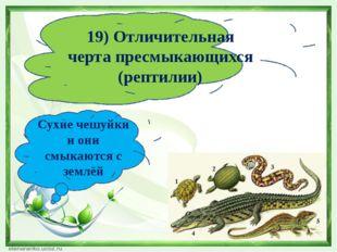 19) Отличительная черта пресмыкающихся (рептилии) Сухие чешуйки и они смыкают