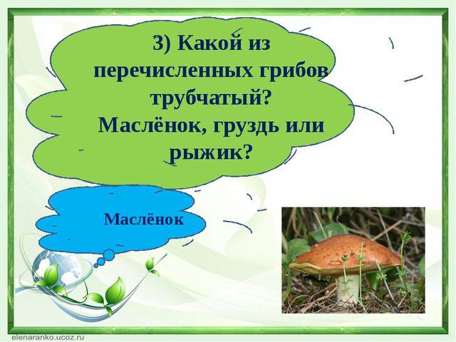3) Какой из перечисленных грибов трубчатый? Маслёнок, груздь или рыжик? Маслё...