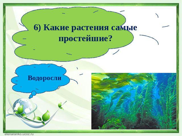 6) Какие растения самые простейшие? Водоросли