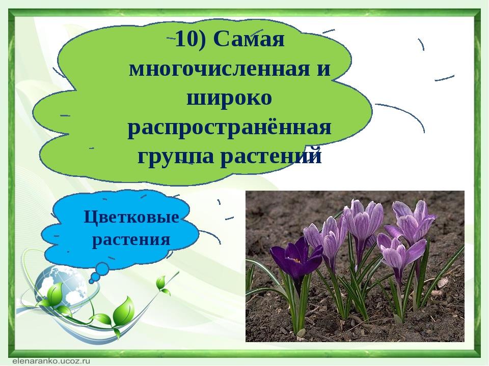 10) Самая многочисленная и широко распространённая группа растений Цветковые...