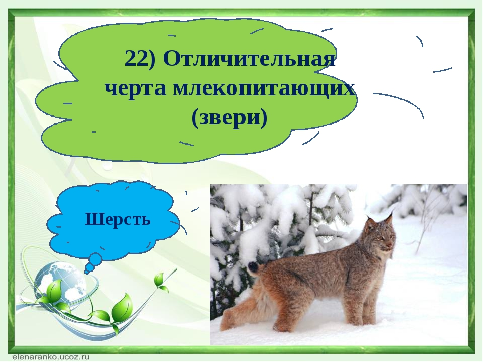 22) Отличительная черта млекопитающих (звери) Шерсть