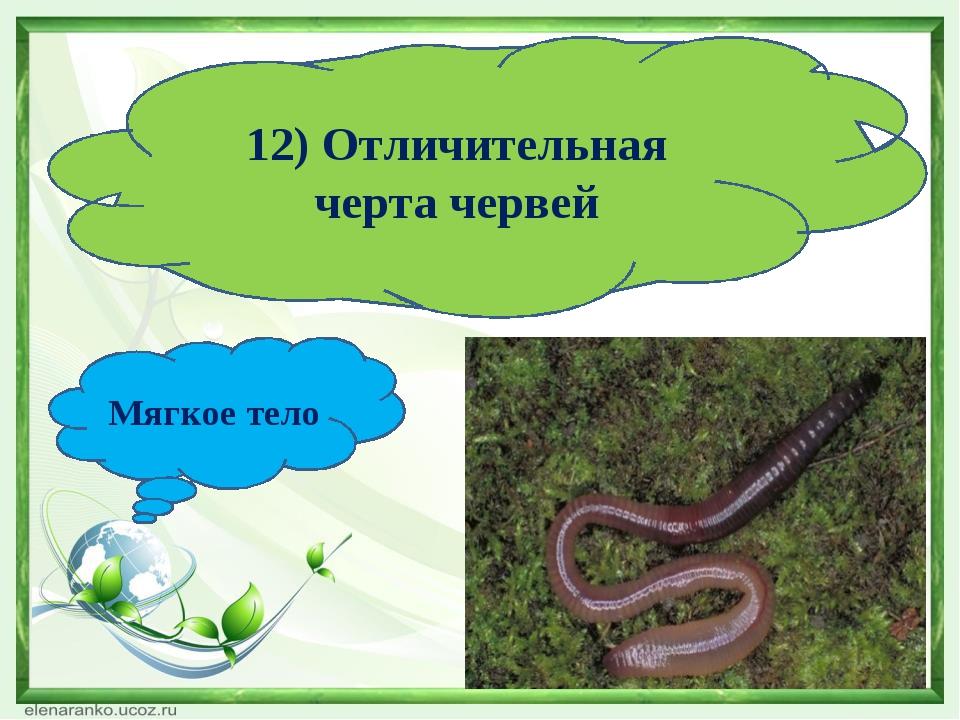12) Отличительная черта червей Мягкое тело