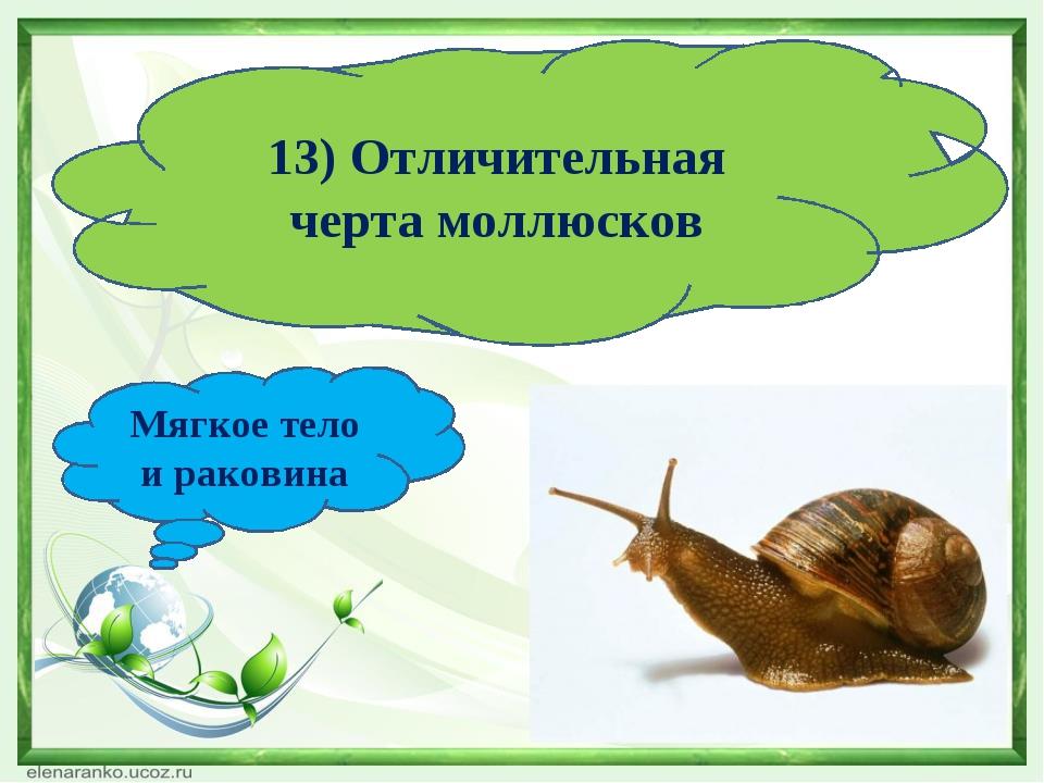 13) Отличительная черта моллюсков Мягкое тело и раковина