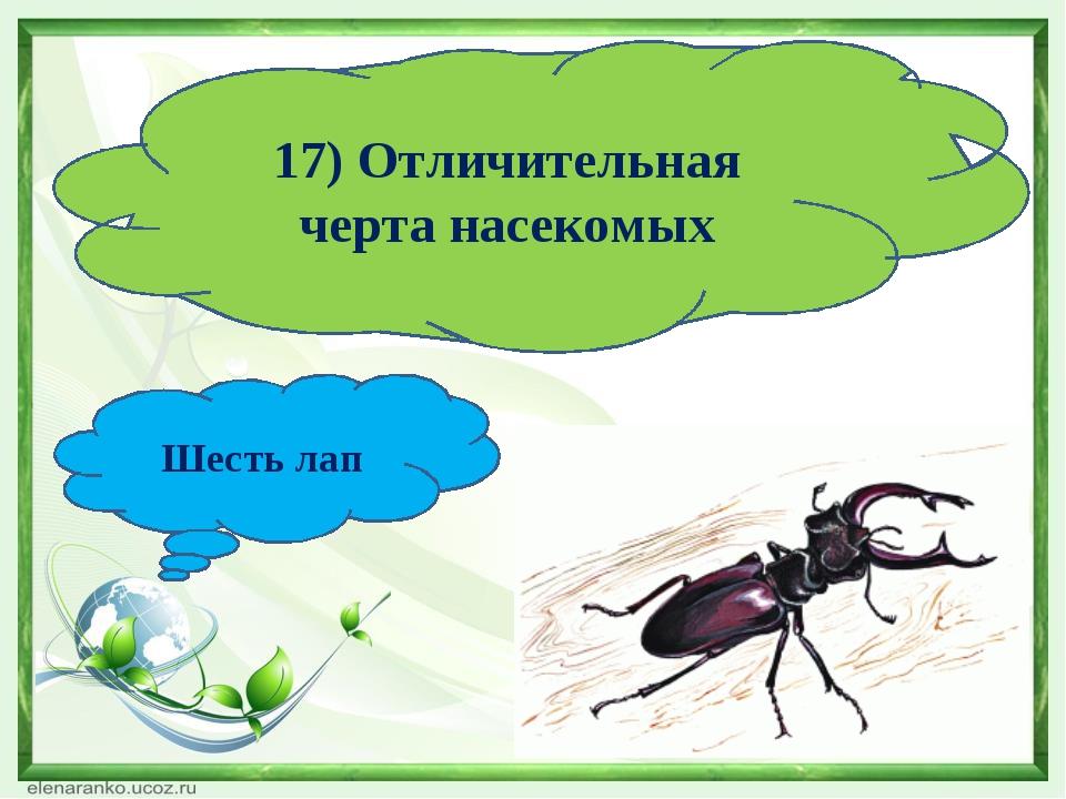 17) Отличительная черта насекомых Шесть лап