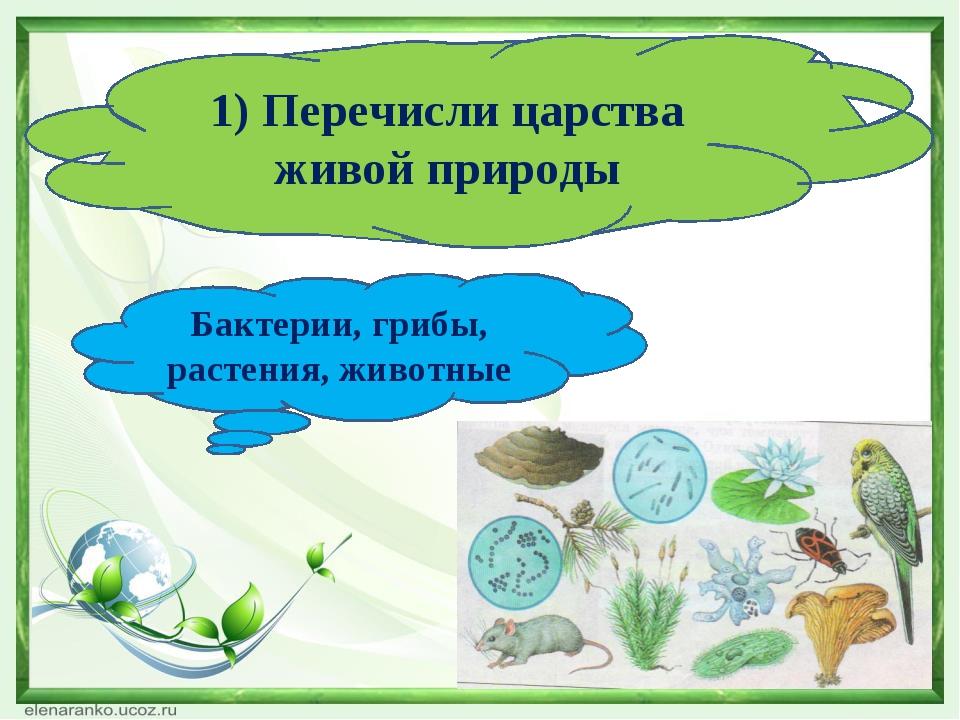 1) Перечисли царства живой природы Бактерии, грибы, растения, животные