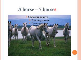 A horse – 7 horses