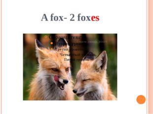 A fox- 2 foxes