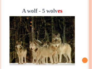 A wolf - 5 wolves