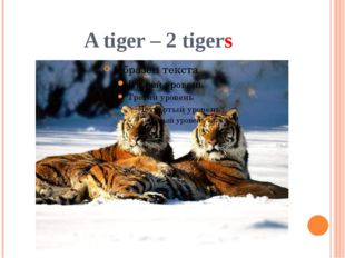 A tiger – 2 tigers