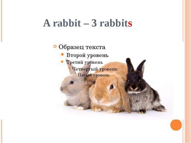 A rabbit – 3 rabbits
