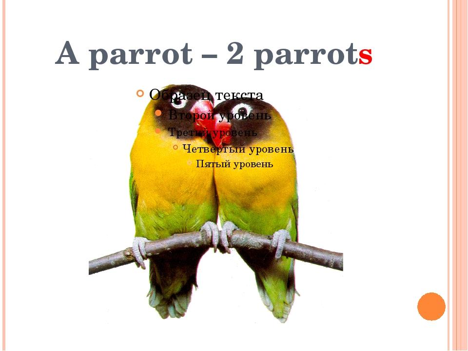 A parrot – 2 parrots