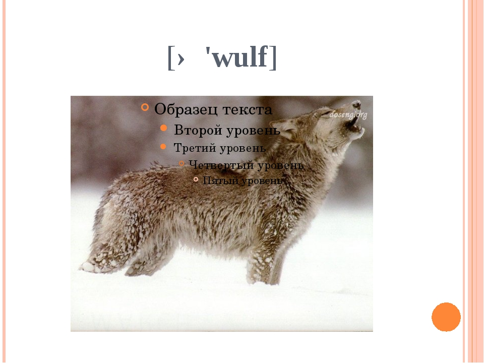[ə 'wulf]