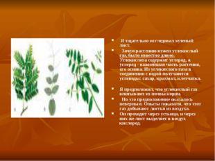 Я тщательно исследовал зеленый лист. Зачем растению нужен углекислый газ, бы
