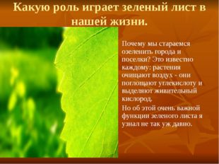 Какую роль играет зеленый лист в нашей жизни. Почему мы стараемся озеленить г