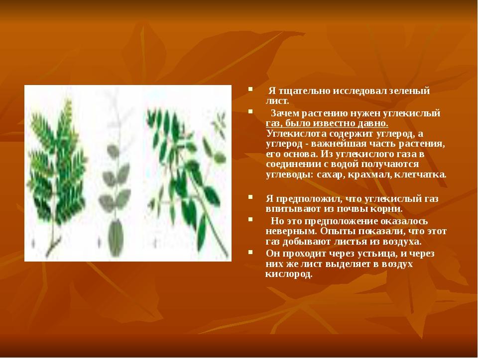 Я тщательно исследовал зеленый лист. Зачем растению нужен углекислый газ, бы...