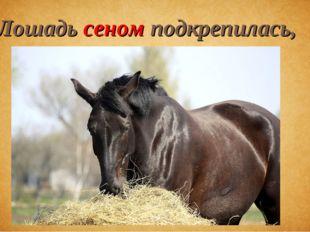 Лошадь сеном подкрепилась,