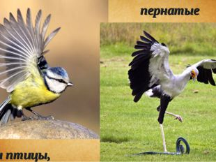 пернатые и птицы,