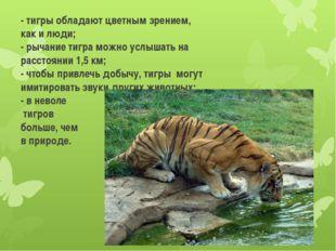 - тигры обладают цветным зрением, как и люди; - рычание тигра можно услышать