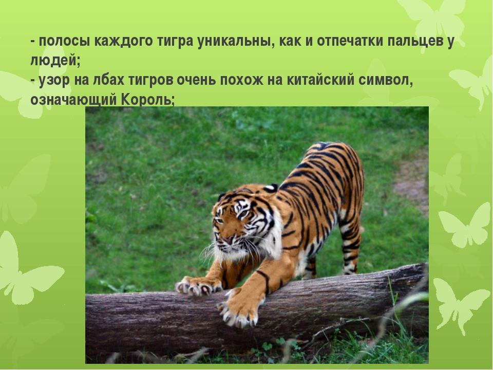 - полосы каждого тигра уникальны, как и отпечатки пальцев у людей; - узор на...