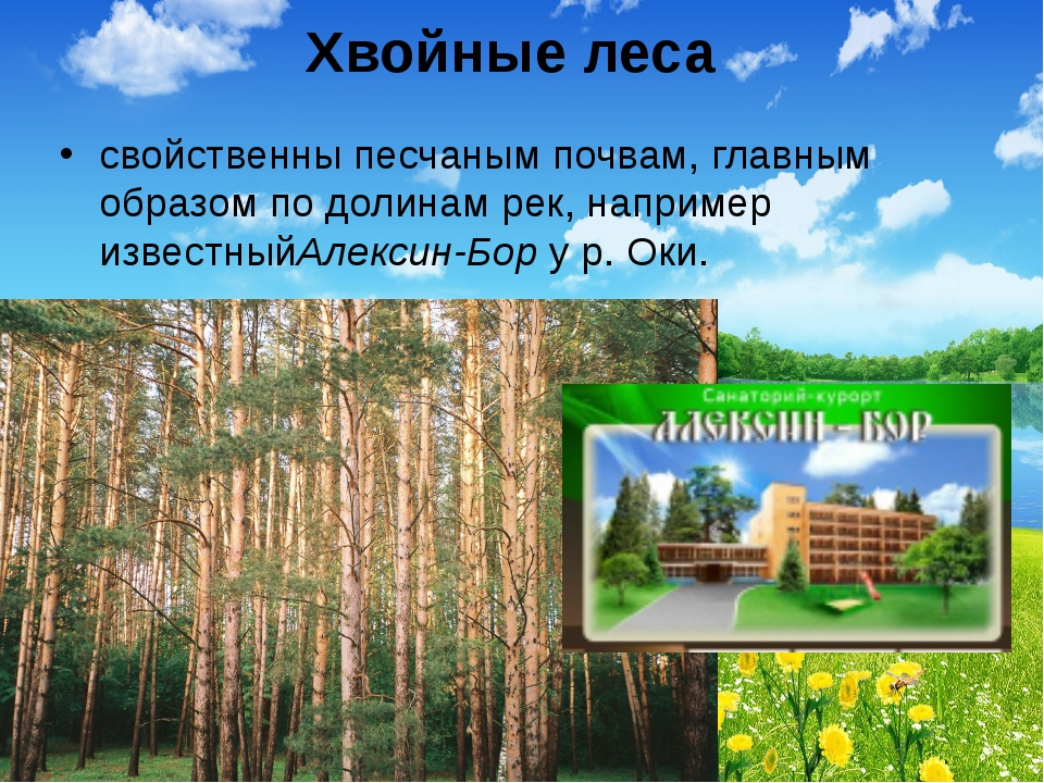 Хвойные леса свойственны песчаным почвам, главным образом по долинам рек, нап...