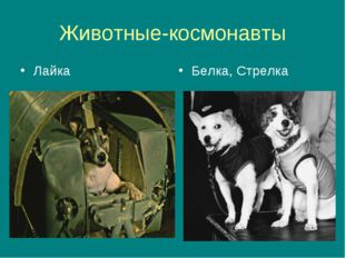 Животные-космонавты Лайка Белка, Стрелка