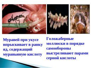 Муравей при укусе впрыскивает в ранку яд, содержащий муравьиную кислоту Голож
