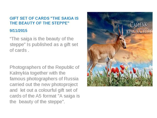 """GIFT SET OF CARDS """"THE SAIGA IS THE BEAUTY OF THE STEPPE"""" 9/11/2015 """"The saig..."""