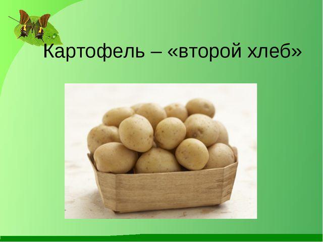 Картофель – «второй хлеб»